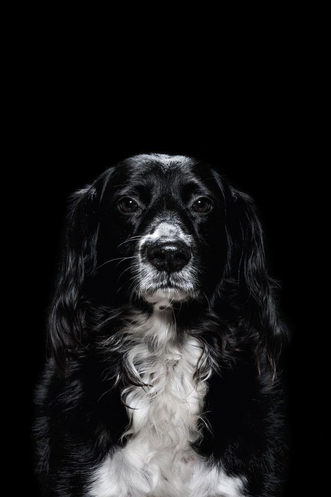 Waldo - portrait of a dog