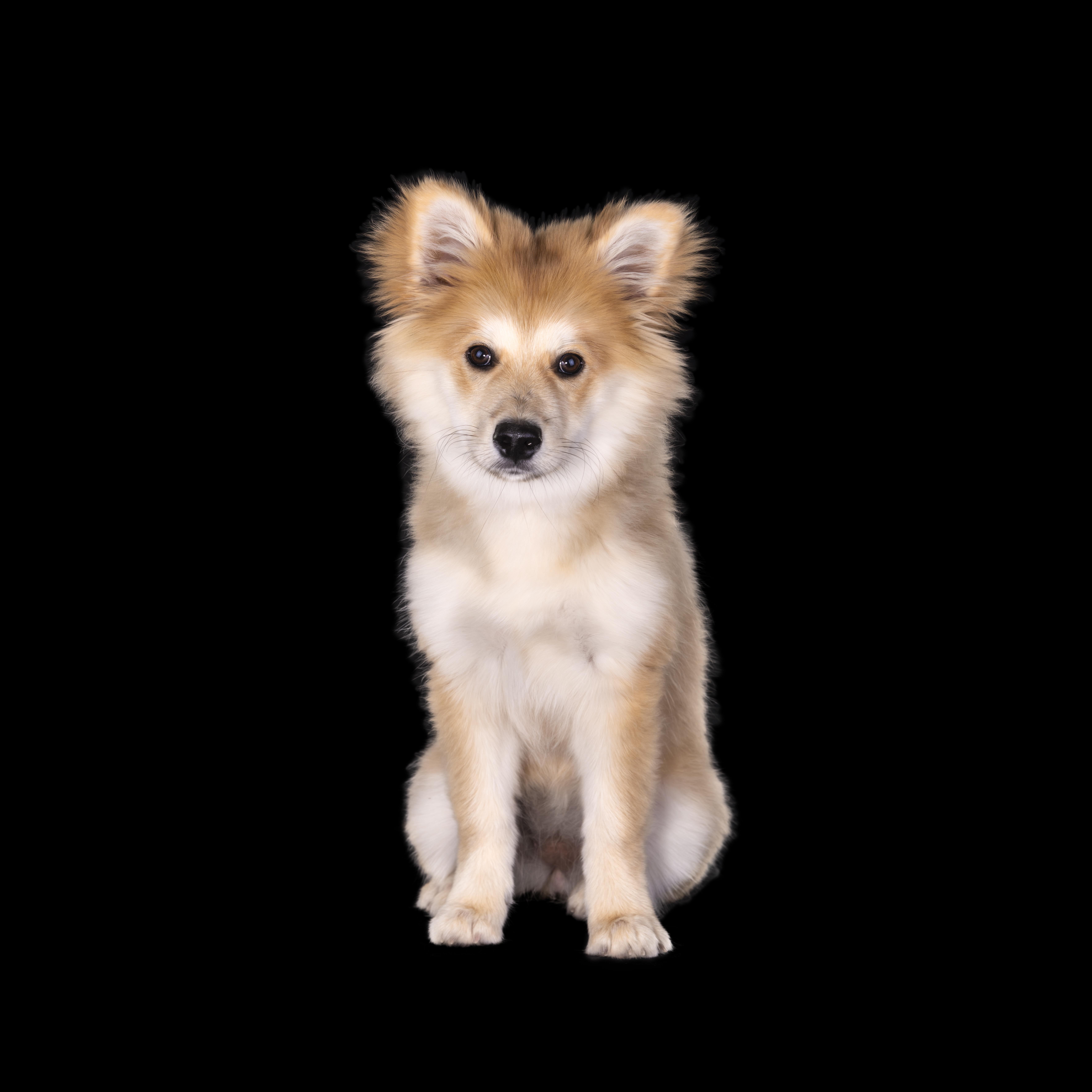 Koko - Portrait of a puppy